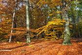Autumn forest — Stockfoto