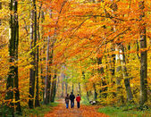Family walking through autumn park — Stok fotoğraf