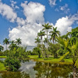 Tropical botanic garden — Stock Photo #6016741