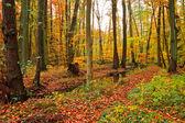 Houten rivier in herfst bos — Stockfoto
