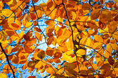Yellow, orange and red autumn foliage at sunny day — Stock Photo