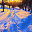 Beautiful sunset in winter park — Stock Photo