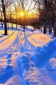 Beautiful sunset in winter park — Stockfoto