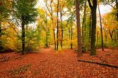 Vibrant image of autumn forest at sunset — Stockfoto