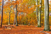 Vibrant image of autumn forest at sunset — Stock Photo