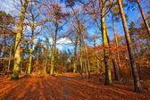 Levande bild av hösten skogen vid solnedgången — Stockfoto