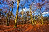 Imagen animada de otoño bosque al atardecer — Foto de Stock