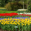 Flower bed in Keukenhof gardens — Stock Photo #6040057