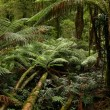 Stock Photo: Rain forest, Australia
