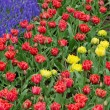 Flower bed in Keukenhof gardens - Stockfoto