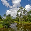 Tropical botanic garden - Stock Photo