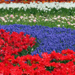 Stock Photo: Flower bed in Keukenhof gardens