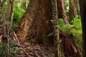 Rain forest, Australia — Stock Photo