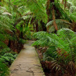Rain forest, Australia — Stock Photo