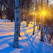 Beautiful sunset in a winter park — Stock Photo