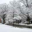 Winter in Washington DC: Palisades — Stock Photo