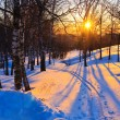 Stock Photo: Beautiful sunset in winter forest