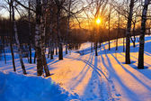 Beautiful sunset in winter forest — Stock Photo