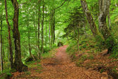 Green mountain forest in Pyrenees — Stock Photo