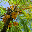 Palmtree — Stock Photo