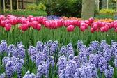 Tulpaner och blåklockor — Stockfoto