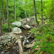 Wooden river in Shenandoah national park — Stockfoto