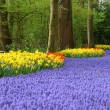 Spring flower bed in Keukenhof — 图库照片