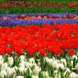 Spring flower bed in Keukenhof — Stock Photo #6181727