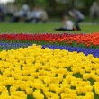 Spring flower bed in Keukenhof gardens — Stock Photo