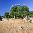 Olive trees growing in ruins of Sanctuary of Poseidon - Stockfoto
