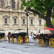 Horses and carts outside of Seville cathedral — Zdjęcie stockowe