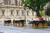 Koně a vozy mimo katedrály v seville — Stock fotografie