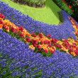 Spring flower bed in Keukenhof — Stock Photo #6200084