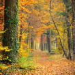 Pathway in the autumn forest — Stock Photo #6200487