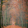 Pathway in the autumn forest — Stock Photo #6200509