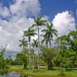Fairchild tropical botanic garden, FL — Stock Photo #6207111