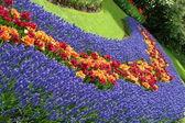 Spring flower bed in Keukenhof — Stock Photo