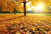 Renkli sonbahar — Stok fotoğraf