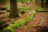 Ciemny las — Zdjęcie stockowe