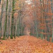 Pathway in the autumn forest -  