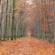 Pathway in the autumn forest — Stock Photo #6222322