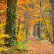 Pathway in the autumn forest — Stock Photo #6232269
