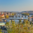View on Prague Bridges — Stock Photo #6366087