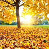 Jesień kolorowy — Zdjęcie stockowe