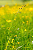 Sunny meadow — Stock Photo