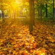 Yellow autumn leaves — Stock Photo #6384099
