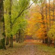 Pathway in the autumn forest — Stock Photo #6384126