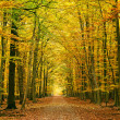 Pathway in the autumn forest — Stock Photo #6385522