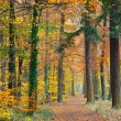 Stock Photo: Pathway in the autumn forest