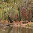 Pond in autumnal park — Foto Stock